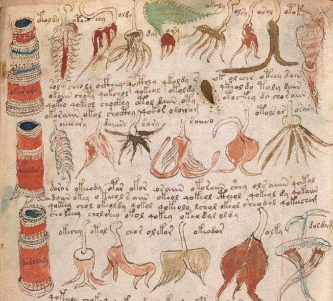 ヴォイニッチ手稿【第5部】 薬学のページ拡大