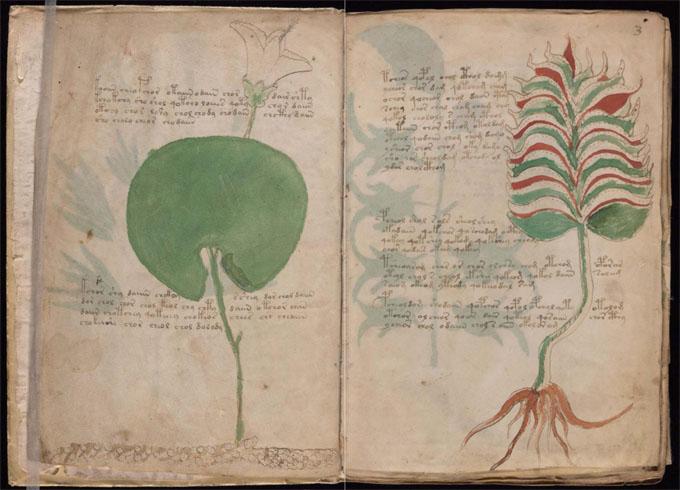 ヴォイニッチ手稿【第1部】植物のページ2