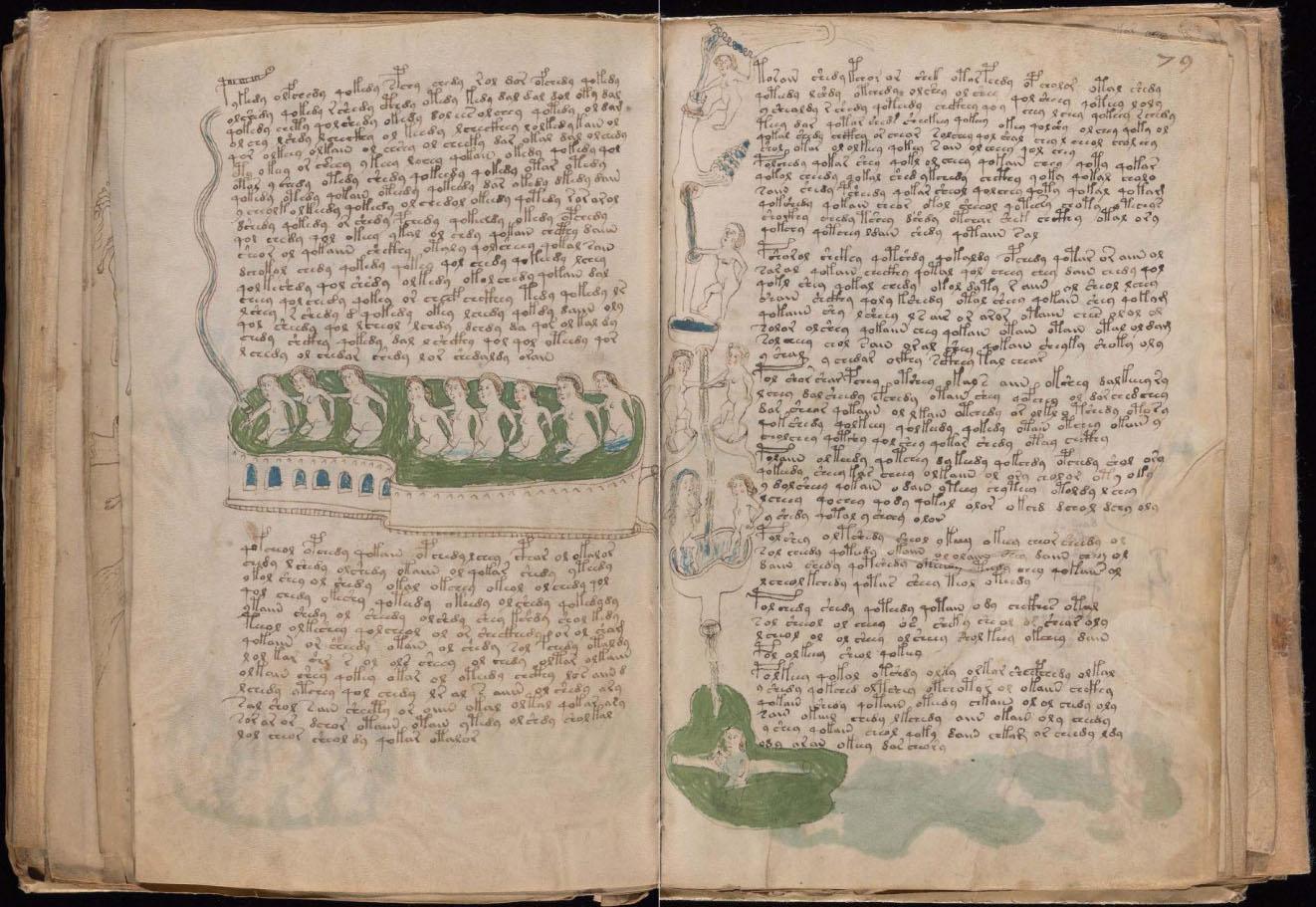 ヴォイニッチ手稿【第3部】生物学のページ2