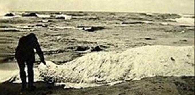 南アフリカのマーゲート海岸沖に打ち上げられたトランコ