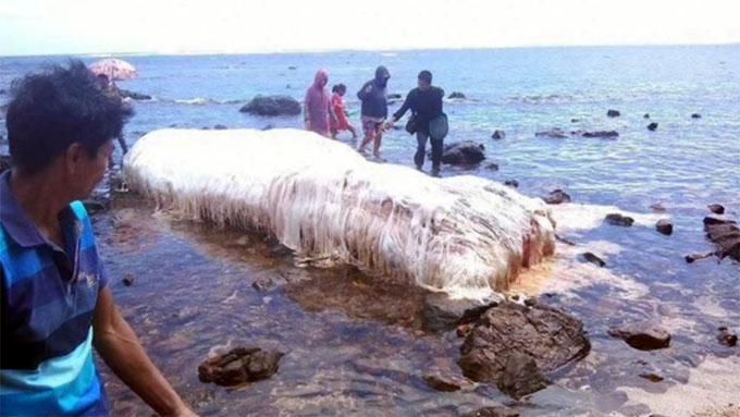 フィリピンの海岸に打ち上げられたトランコのような謎の巨大生物