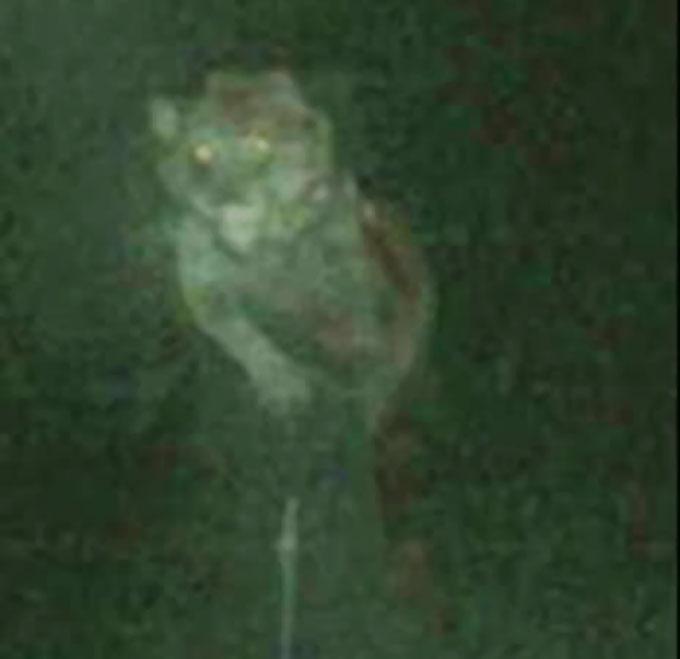 2007年10月、ミシガン州で撮影されたドッグマン