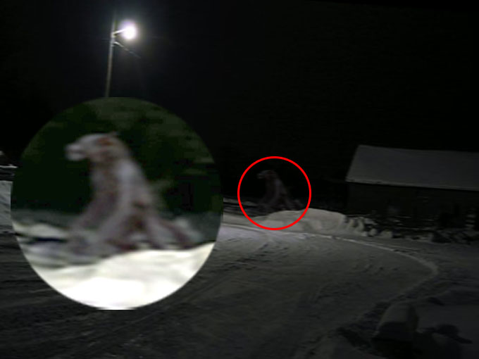 2008年に撮影されたミシガン・ドッグマン