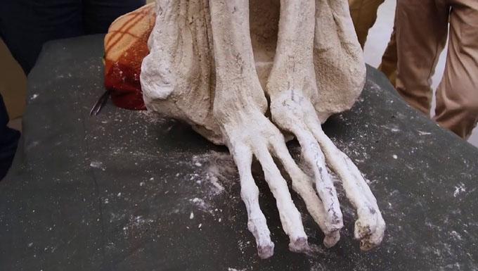ミイラの3本指の足