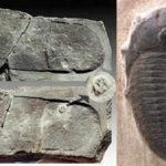 三葉虫を踏んだ足跡! 5億3千万年前の人間が、サンダルで踏み付けた化石?