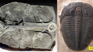 三葉虫を踏んだ足跡の化石! 5億3千万年前の人間が、サンダルで踏み付けた?