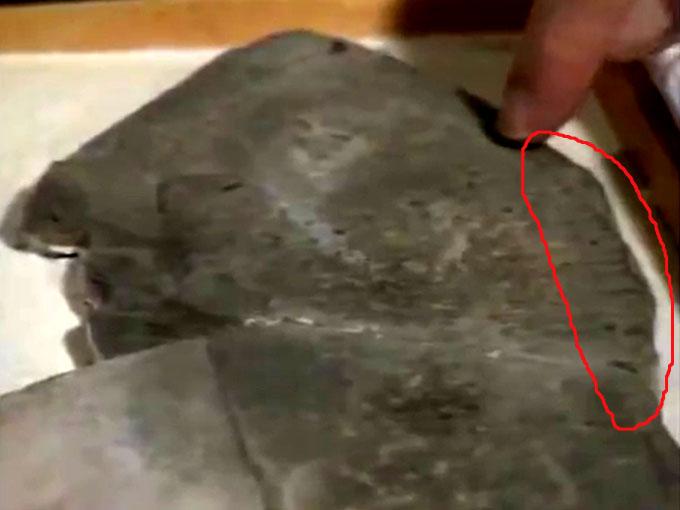 サンダルの縫い目の化石1